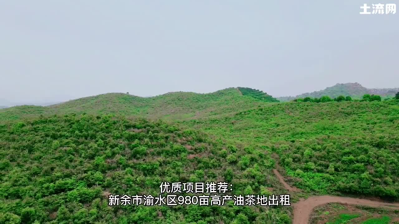 農業投資項目推薦:江西新余市渝水980畝高產油茶地出租